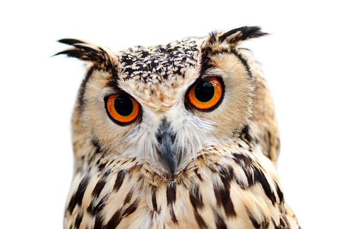 IEMT Owl
